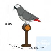 Jekca - 非洲灰鸚鵡 01S
