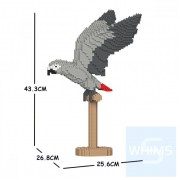 Jekca - 非洲灰鸚鵡 02S